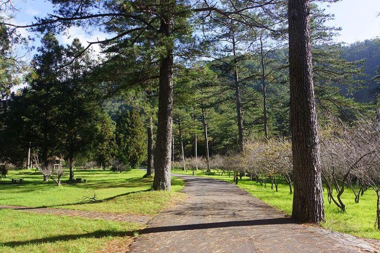 松林大道_Pine_Forest_Avenue_-_panoramio